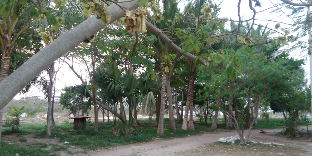 El Charquito, Megaparque —Voz Abierta_0009_IMG_20170427_190435.jpg