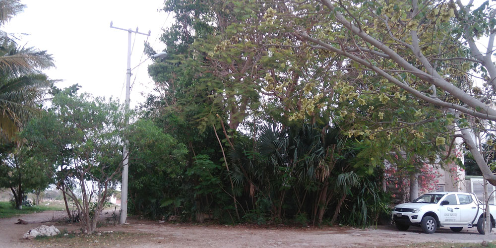 El Charquito, Megaparque —Voz Abierta_0010_IMG_20170427_190416.jpg