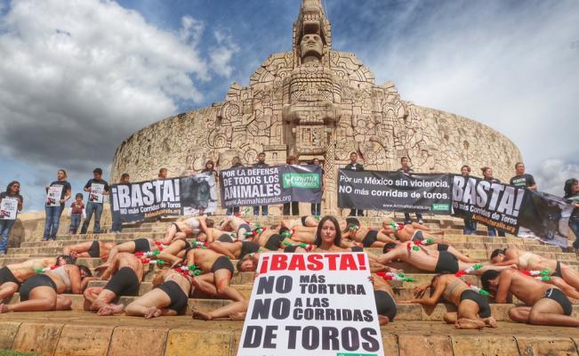 maltrato animal Mérida Yucatán México